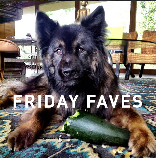 Chewy Friday Faves