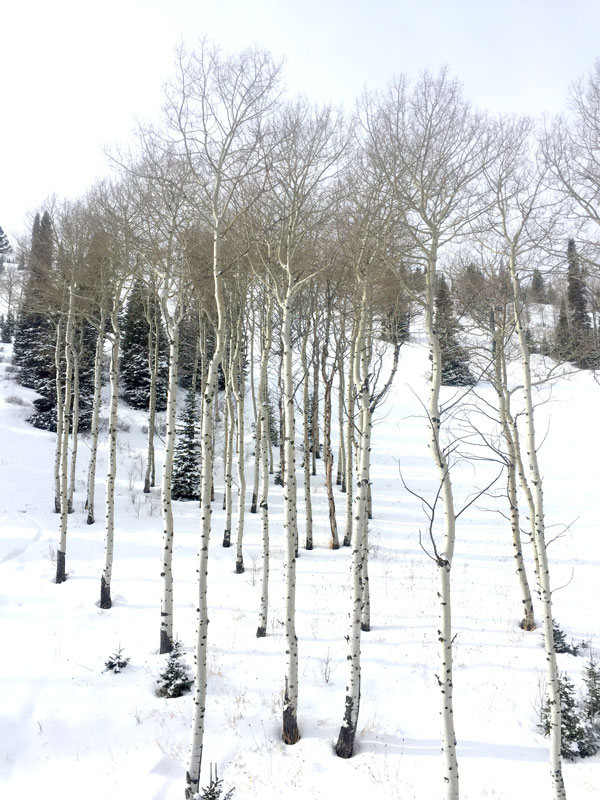 Deer-Valley-8-foodiecrush.com