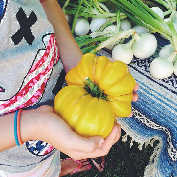 yellow-tomato