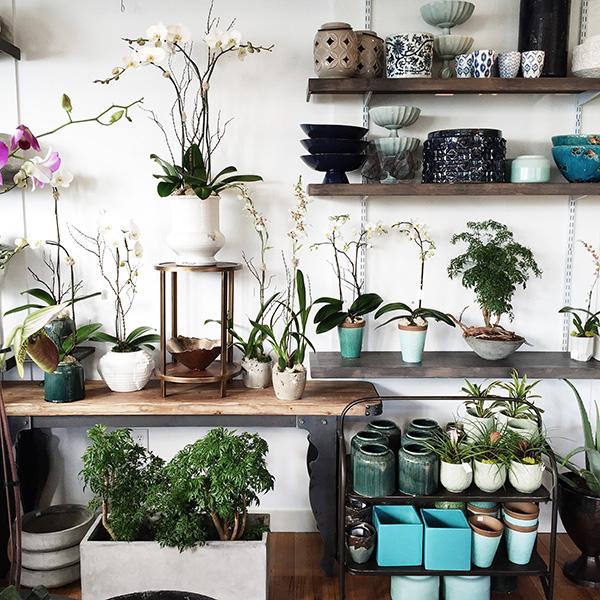 Orchid Dynasty, Salt Lake City UT