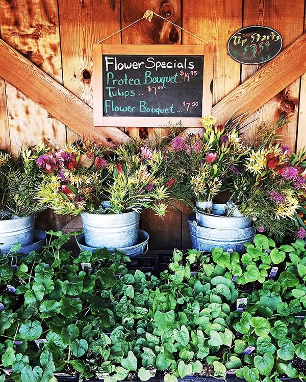 FLowers in Carmel California | foodiecrush.com